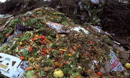 Global campaign launched to reduce food waste