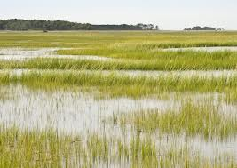 Government gears up to protect wetlands