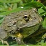 WRC study celebrates KNP's amphibians on World Biodiversity Day