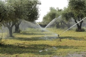 Agricultural water use investigated