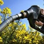 The biofuel debate