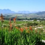 'Zero waste to landfill' in the Mother City