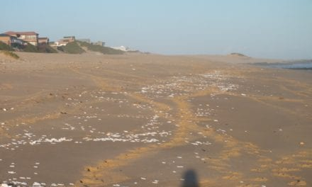Ecological disaster prevented off Bluewater Bay
