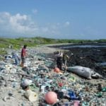 Conserving Africa's oceans