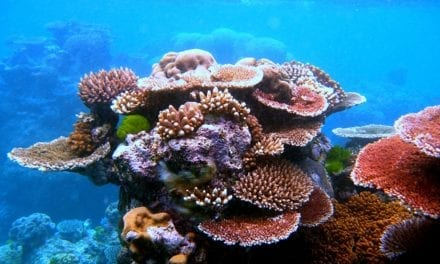 Climate change reducing coral reefs protective abilities