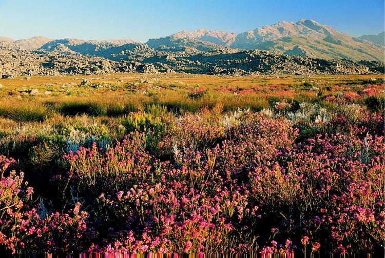 Cape flora achieve heritage status