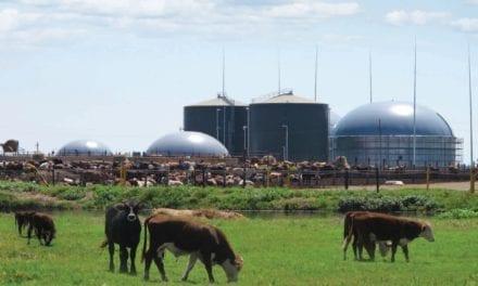Anaergia to manage Bronkhorstspruit biogas plant
