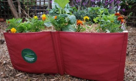 How to create your own food waste garden