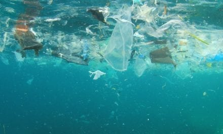 Plastics and packaging industry collaborate to find solutions to marine litter