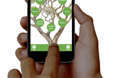 What's that tree? There's an app for that…