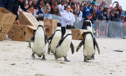 Plastics fundraiser gives seabird hospital wings