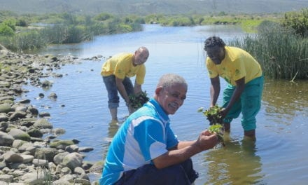 Working for Water keeps sewage out of Swartkops River