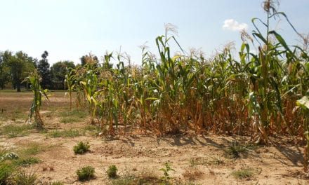 Agricultural sector under the spotlight amid Western Cape drought