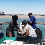 Ensuring environmental protection at Durban port project