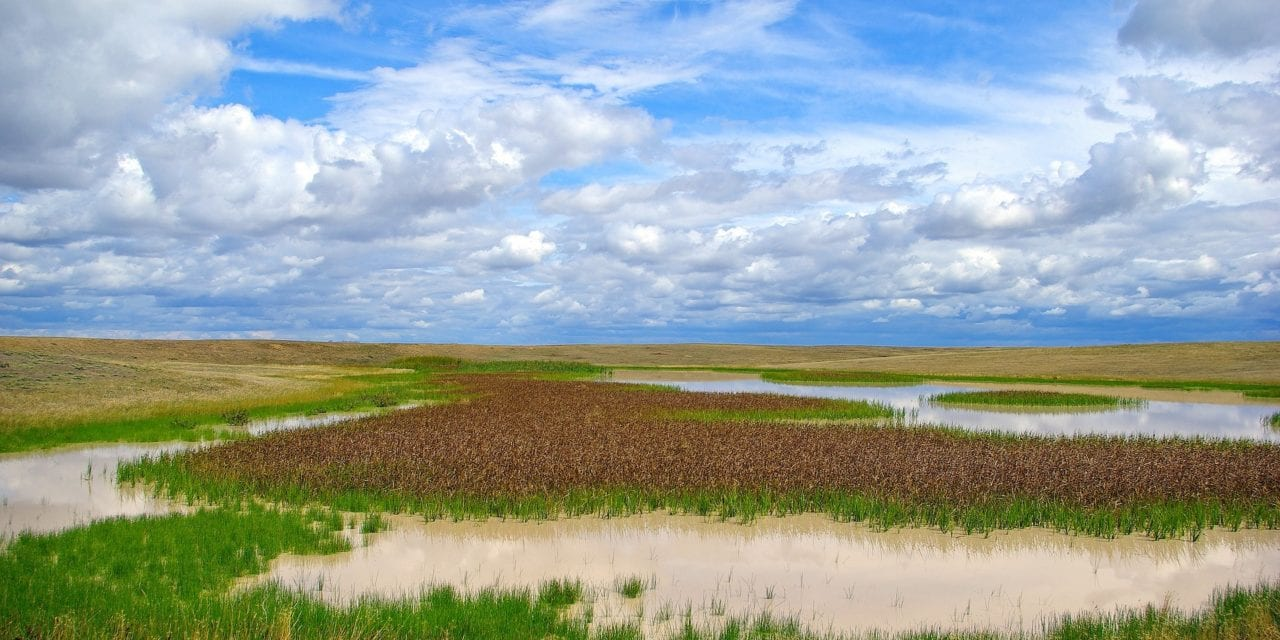 Wetlands: the world's water wonder