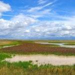 Wetlands: the world's water wonder
