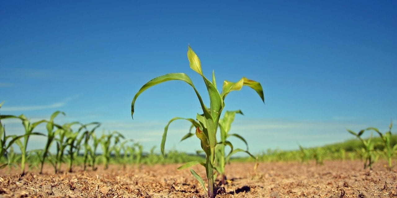 Engineers to add expertise to agriculture in NW