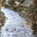 DWS calls on all South Africans to clean-up rivers and dams