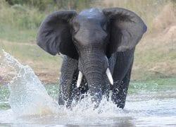Bosveld Phosphates faces criminal charges for Kruger Park river pollution