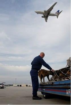Air Cargo Security image